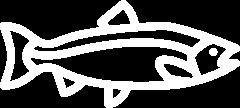 big-salmon@2x